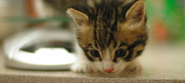 Kitty Training