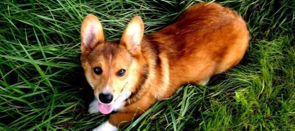 Healthiest Dog Breed