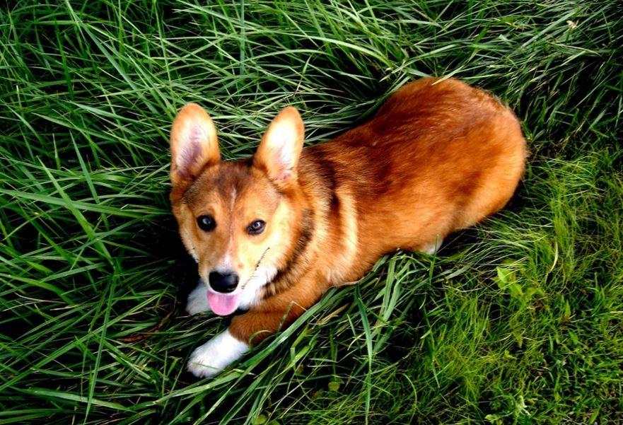 Wireless Dog Fence Pet Valu