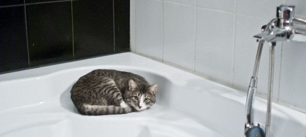 how to bath cat